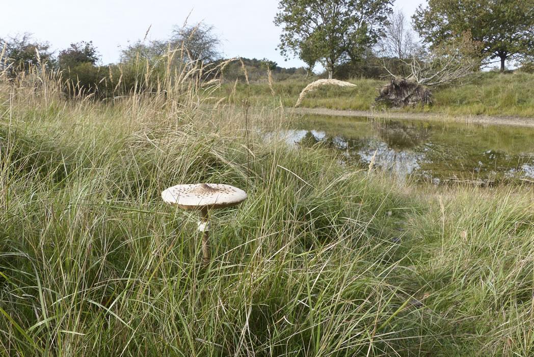 amsterdam water supply dunes 07 large mushroom