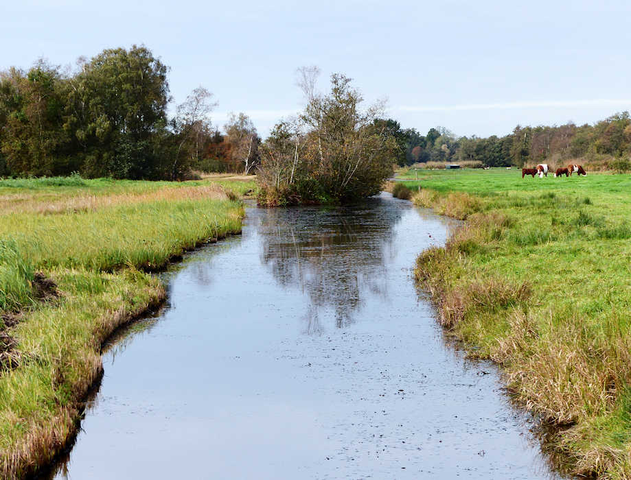 """walking the kromme rade 07  """"former peat ditch""""  16 october 2020"""
