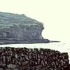 cliffs icon